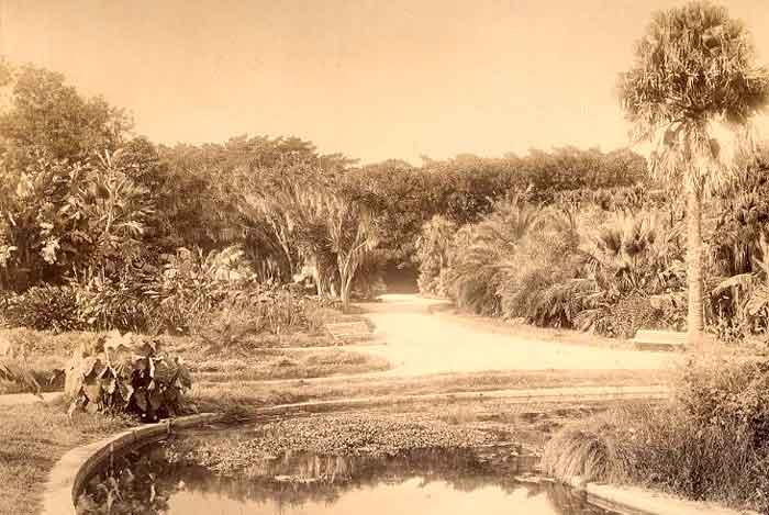 1880_hamma.jpg