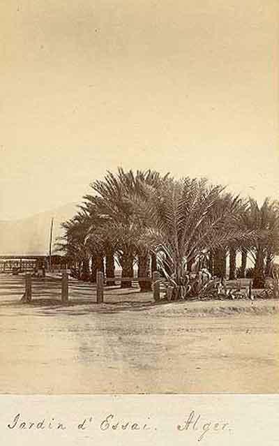 1880_jardin.jpg