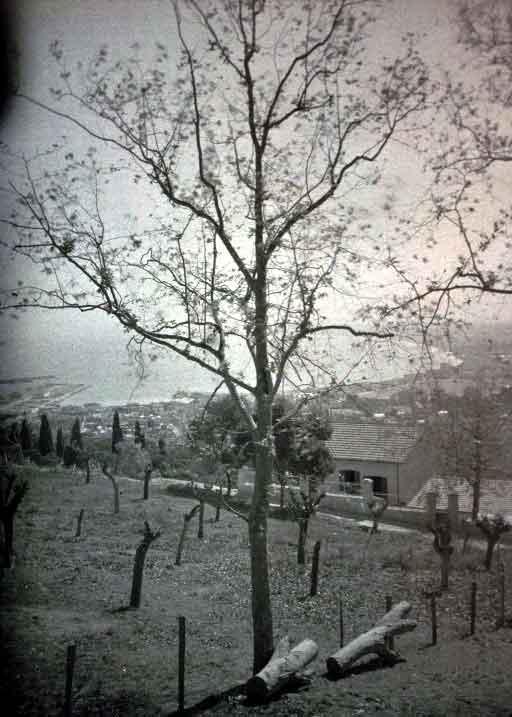 alger_1905.jpg